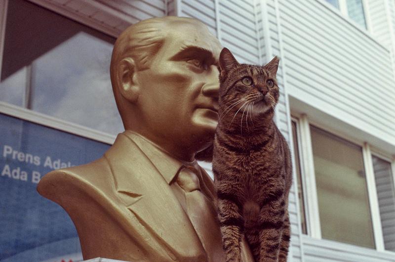 ataturk kedileri