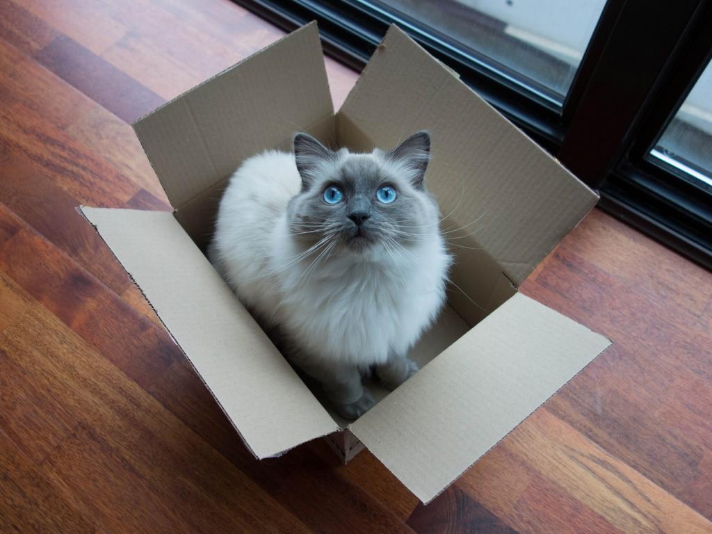 kediyle birlikte ev tasima
