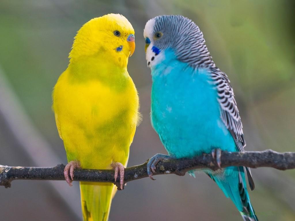 sari mavi kuş