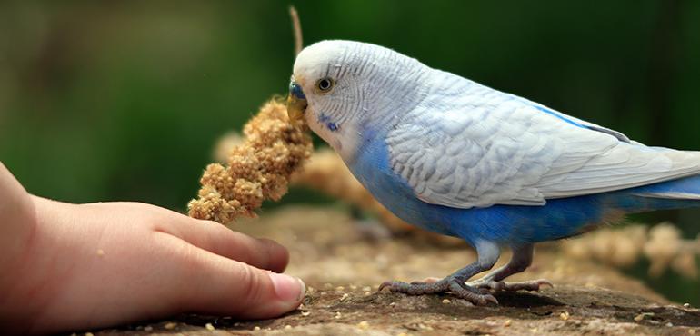 Muhabbet Kuş